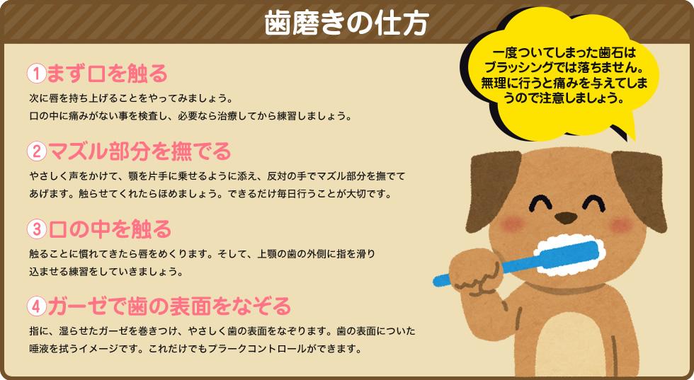 歯磨きの仕方