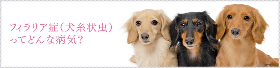 フィラリア症(犬糸状虫)ってどんな病気?